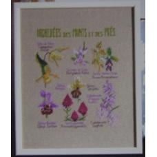 Orchidées des monts et des prés
